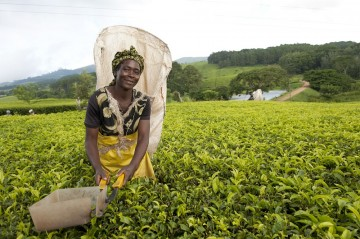 Image for Malawi Fairtrade Network